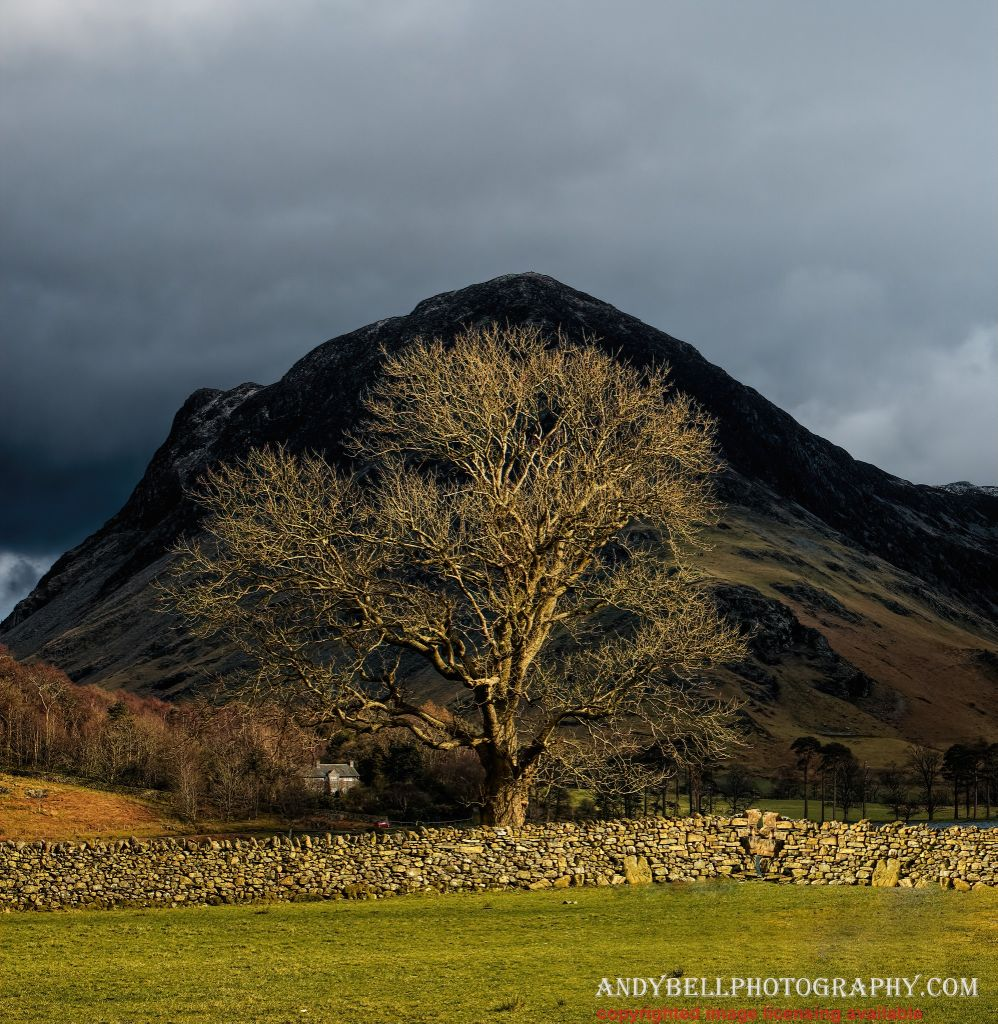 Spotlit_Tree_Buttermere_MG_1331_v1_ninja-Exposure.jpg